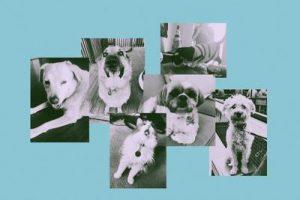 สัตว์เลี้ยง 10 วิธีและความเป็นอยู่ที่ดีทางจิตใจไปรวมกัน